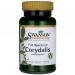 Corydalis (Kokorycz)