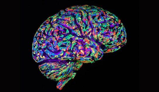 Suplementy dla zdrowia Twojego mózgu