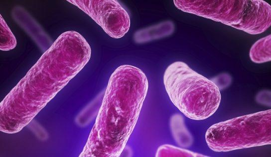 Lactobacillus plantarum – kompan w walce z IBS i nie tylko