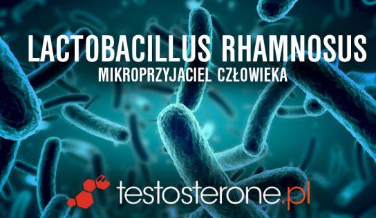 Lactobacillus rhamnosus – mikroprzyjaciel człowieka