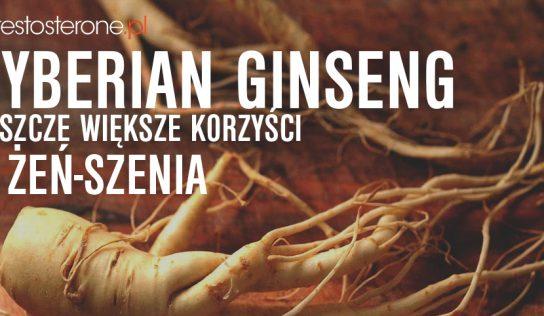 SIBERIAN GINSENG – ELEUTHERO – JESZCZE WIĘKSZE KORZYŚCI Z ŻEŃ-SZENIA