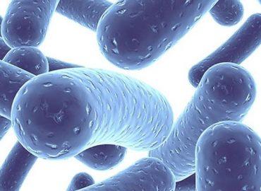 Lactobacillus rhamnosus GG – zastosowania