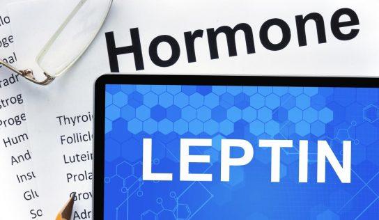 Leptyna – hormon sytości, czy coś więcej?