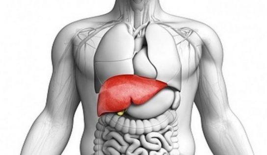 Wątroba, czyli detoksykacyjna baza organizmu