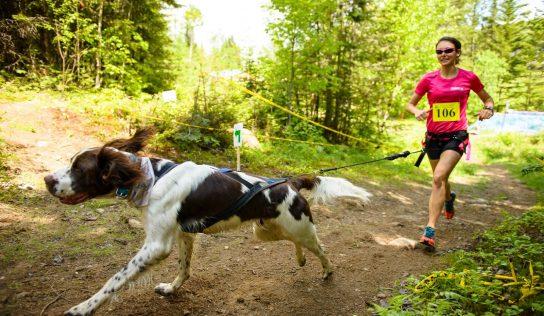 Pies na smycz i do biegu, gotowi… start!