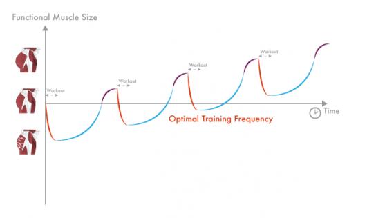 Częstotliwość treningowa a roztrenowanie
