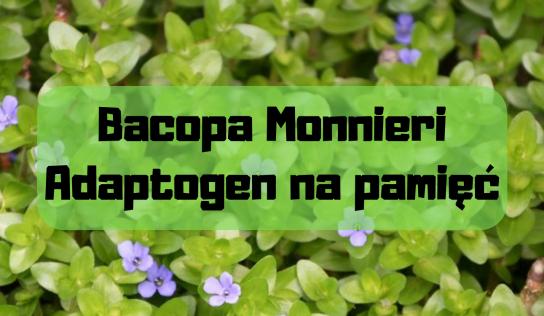 Bacopa monnieri – adaptogen na pamięć