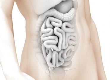 Mikrobiota jelitowa, a otyłość