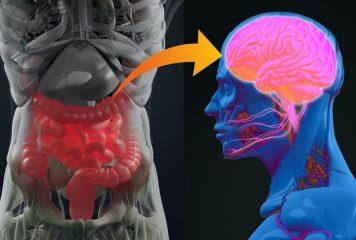 Korelacja między zdrowiem jelit, a zaburzeniami psychicznymi. Oś jelito-mózg, a depresja