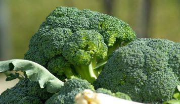 Brokuł – warzywo o niezwykłych właściwościach