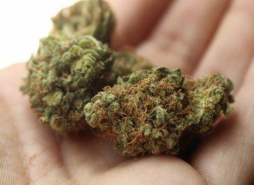 Marihuana w życiu codziennym i sporcie