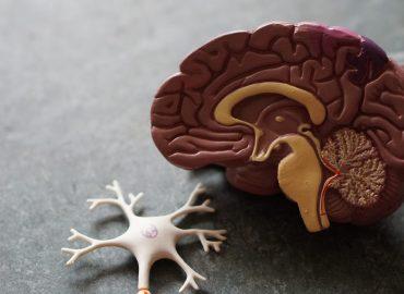 Jak aktywność fizyczna wpływa na mózg?